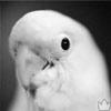 Аватары птиц