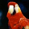 аватар 100x100. Птицы