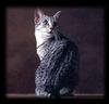 аватар 100x96. Коты