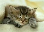 аватар 150x112. Коты