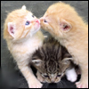 аватар 100x100. Коты