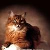 аватар 99x100. Коты