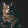 аватар 100x99. Коты