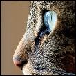 аватар 110x110. Коты