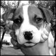 аватар 110x110. Собаки