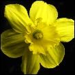 аватар 110x110. Цветы