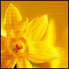 аватар 100x100. Цветы