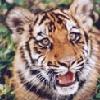 аватар 100x100. Тигры