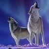 аватар 100x100. Волки